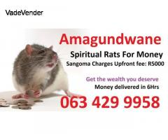 Powerful money spell from spiritual rats in Centurion | Welkom | Benoni | Gaborone +27634299958